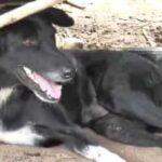 Anjing cacat selamatkan bayi yang dikubur hidup-hidup oleh ibunya
